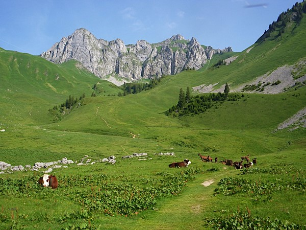 independent walking holiday alpine meadows alps France GR 5